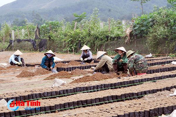 Chậm cơ giới hóa - rào cản phát triển lâm nghiệp ở Hà Tĩnh