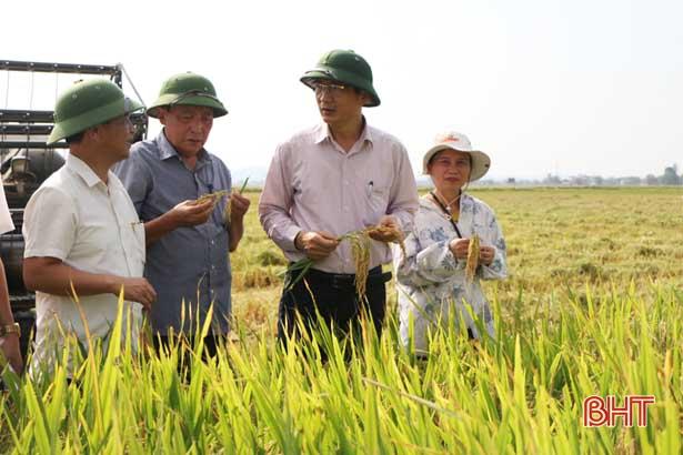 Đốc thúc thu hoạch lúa xuân, chuẩn bị sản xuất hè thu