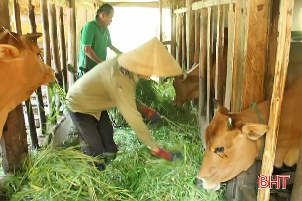 Vũ Quang: 1.900 hộ nông dân thu nhập trên 100 triệu đồng mỗi năm