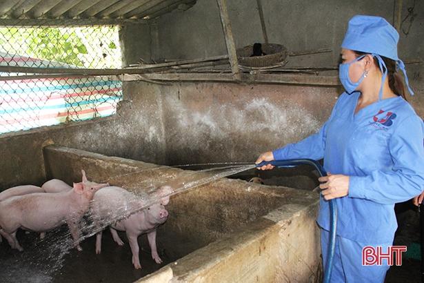 Hà Tĩnh: Ngăn dịch lây lan, khi bán lợn phải báo cáo chính quyền xã