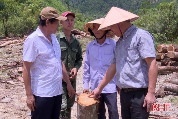 Trồng cồng xen keo ở Hương Sơn - một giải pháp, 2 lợi ích!