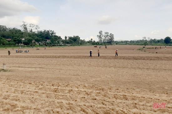 Sản xuất vụ đông ở Hà Tĩnh đạt trên 41% kế hoạch