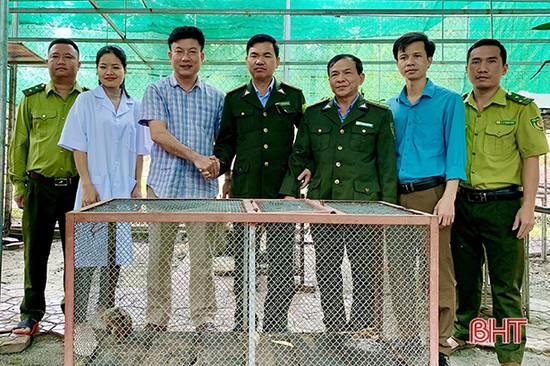 Vườn Quốc gia Vũ Quang tiếp nhận 1 cá thể cu li nhỏ