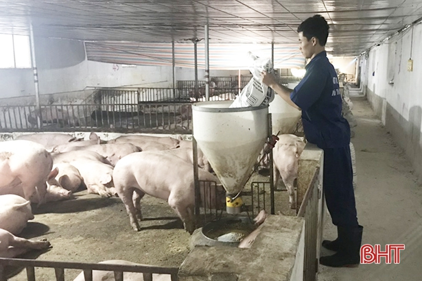 Các trại lợn Hà Tĩnh tăng cường phòng chống dịch, đảm bảo nguồn cung thị trường cuối năm