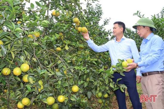 Vũ Quang có thêm 11 sản phẩm đủ điều kiện tham gia OCOP cấp tỉnh Hà Tĩnh