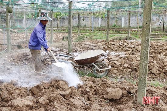 Vùng lũ Cẩm Xuyên khôi phục hơn 94% diện tích vụ đông