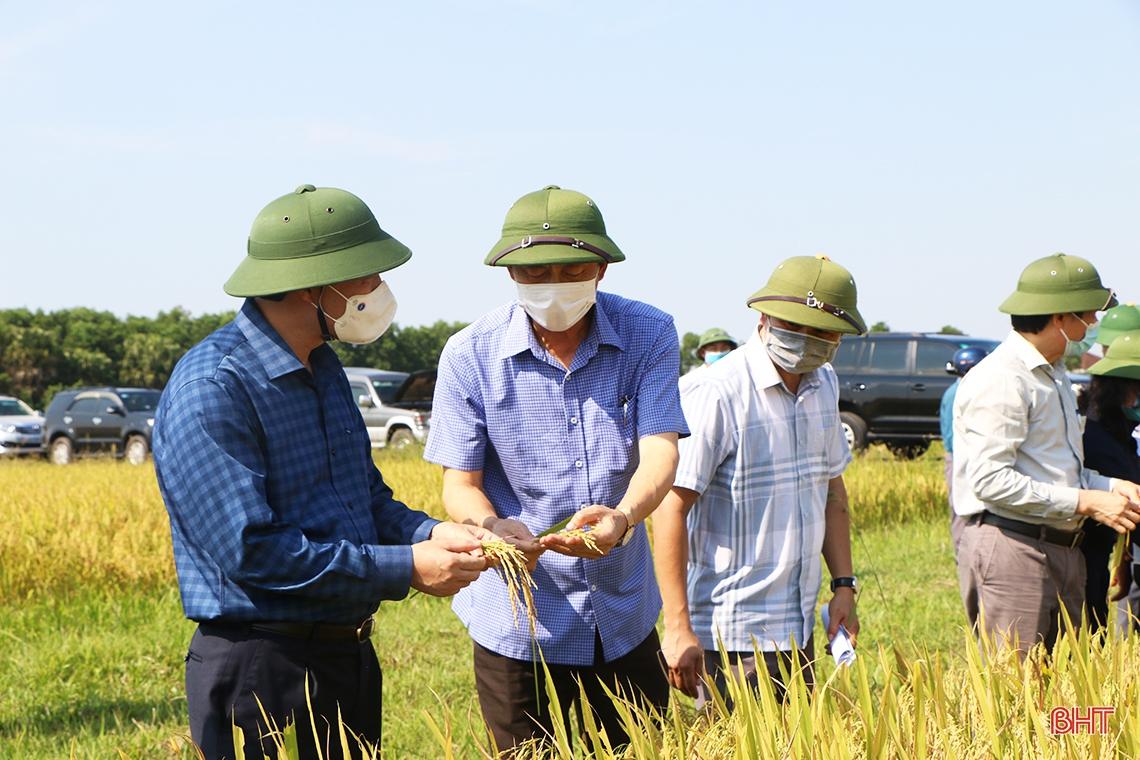 Đẩy nhanh tiến độ thu hoạch lúa xuân, triển khai sản xuất vụ hè thu đúng kế hoạch